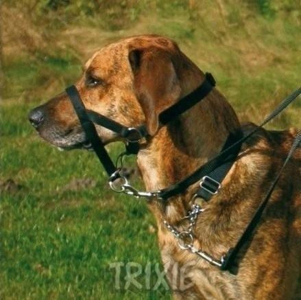 Kaganiec treningowy w formie uzdy dla psa - nauka chodzenia na smyczy