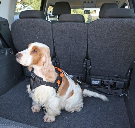 Szelki samochodowe dla psa rozmiar S Pomarańczowe
