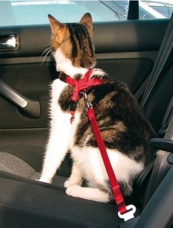 Szelki samochodowe z zapięciem dla kota